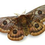 Moth-Extinction-7278ddc0