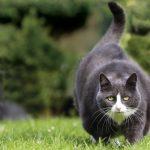 overweight-cat-bb3ce54d