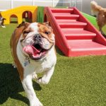 pet-boarding-facilities-e0c924cb